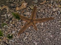 Starfish in shallow sea pool Royalty Free Stock Images