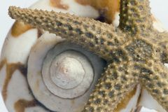Starfish and shell Stock Photography
