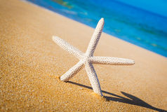 Starfish, Shell on the Beach Stock Photography