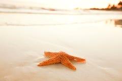 Starfish shell on beach in sunrise light Stock Images