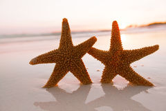Starfish shell on beach in sunrise light Stock Photo