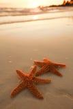 Starfish shell on beach in sunrise light Stock Image