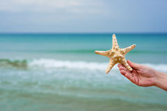Starfish shell in human hand on the beach. Copy space for your t. Ext. Close up Stock Photo