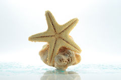 Starfish & shell rock Royalty Free Stock Photo