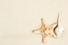Starfish and shell on sand Royalty Free Stock Image