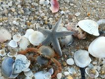 Starfish, shell, sea, beach, crabs royalty free stock photo