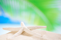 Starfish  shell on sea beach Royalty Free Stock Image