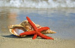 Starfish and shell on the seashore Stock Photography