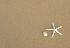 Starfish and shell Royalty Free Stock Photography