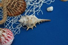 Starfish, Shell, Stones, Rope and Net Against a Blue Background with Copy Space. Summer Holliday. Nautical, Marrine concept. Starfish, Shell, Stones, Rope and Royalty Free Stock Image