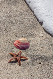 Starfish, Shell, and Wave Royalty Free Stock Images