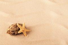 Starfish and shellfish mollusk stock photo