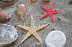 Starfish and shells Stock Photography