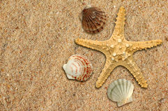 Starfish and shells. On the sand Royalty Free Stock Photos