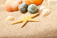 Starfish and shells Royalty Free Stock Photography