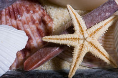 Starfish and Shells 3. Close up of A Small Starfish and Shells Stock Photography