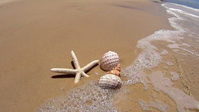 Starfish And Shells. Wave washes over a starfish and two different shells on the beach stock video footage