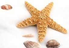 Starfish and Shells. From the ocean on white background stock photos