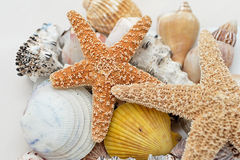 Starfish and shells. On white back Royalty Free Stock Photo