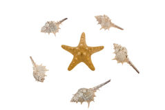 Starfish and shells stock image