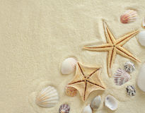 Starfish with shells on the Beach Stock Photo