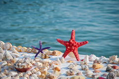 Starfish and shells. On a beach Stock Photo