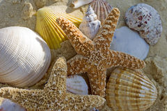 Starfish and shells on the beach. Close up Royalty Free Stock Images