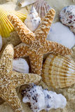 Starfish and shells on the beach. Close up Royalty Free Stock Photography
