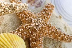 Starfish and shells on the beach. Close up Royalty Free Stock Photo