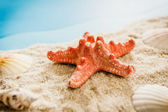 Starfish and shells on the beach Stock Image