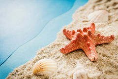 Starfish and shells on the beach Stock Photo