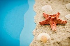 Starfish and shells on the beach Stock Photos