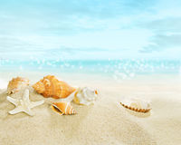 Starfish and shells on the beach. royalty free stock images
