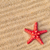 Starfish and shells on a beach Royalty Free Stock Image