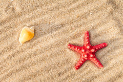 Starfish and shells on a beach Royalty Free Stock Photography