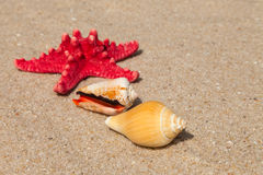 Starfish and shells on a beach Royalty Free Stock Images