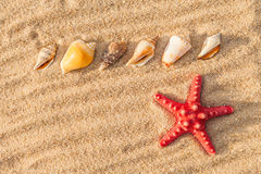 Starfish and shells on a beach Royalty Free Stock Photos