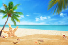 Starfish and shells on beach sand. Beach and sea with palm in background.  Royalty Free Stock Photos