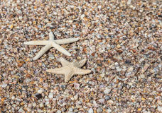 Starfish and shells on the beach. Stock Images