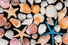 Starfish and shells Royalty Free Stock Images