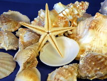 Starfish and shells Stock Image