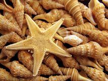 Starfish and shells closeup Royalty Free Stock Photo