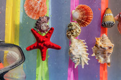 Starfish, shells, diving mask, lying on a colored background wit. Seashells lying on a colorful background stock image