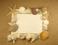 Starfish and shells with frame on the beach Royalty Free Stock Image