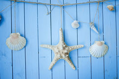 Starfish and shells hanging on boards Stock Photography