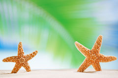 Starfish shells on the  ocean beach and seascape Stock Photo