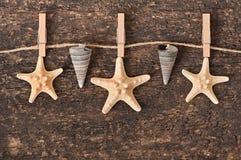 Starfish and shells Royalty Free Stock Image