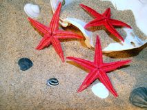Starfish and shells on the sand Stock Images