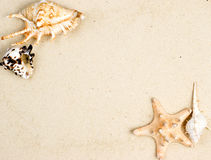 Starfish and shells on sand Stock Images