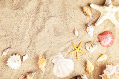 Starfish and shells on sand beach stock image